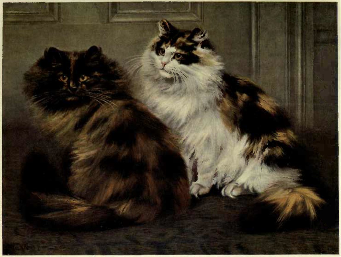 TORTOISESHELL AND TORTOISESHELL-AND-WHITE PERSIANS (From a Painting by W. Luker, Jun.)