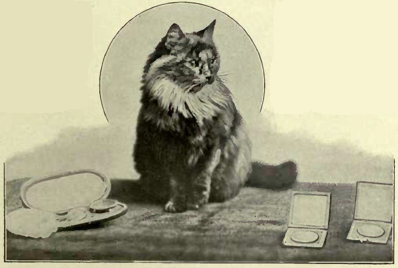 "MISS KATE SANGSTER´S ""ROYAL YUM YUM"" (Photo: W. V. Amey, Landport.)"