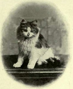 "MISS YEOMAN´S TORTOISESHELL AND WHITE ""MARY II."" (Photo: D. Pym. Stratham.)"