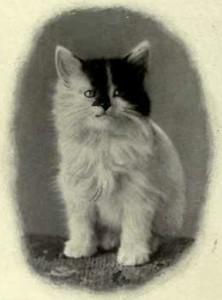 A GROTESQUELY MARKED KITTEN (Photo: E. Landor, Ealing)