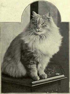 """KING CY."" SILVER NEUTER BELONGING TO Miss AVERY JONES. (Photo: F. Bromhead, Clifton.)"