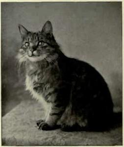AFRICAN CAT. (Photo: E. Landor, Ealing.)
