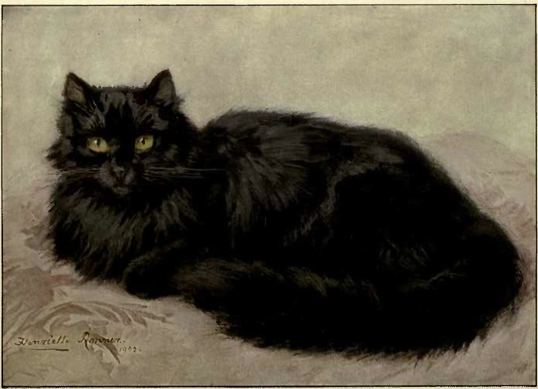 BLACK PERSIAN (Painted specially by Madame Henriette Ronner.)