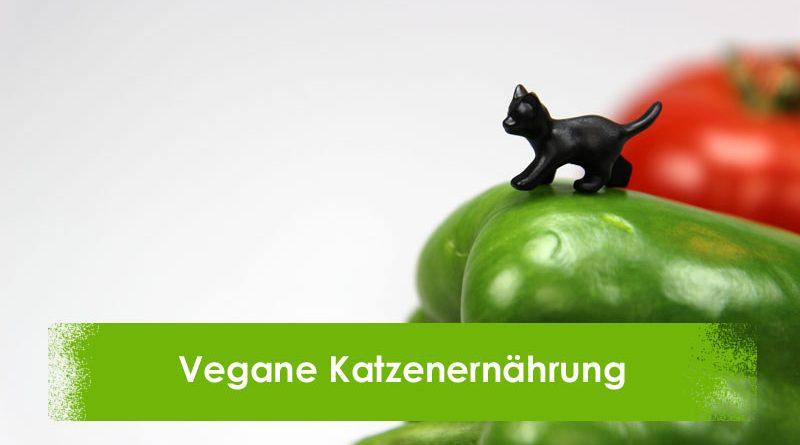 Vegan, Vegetarisch, Katzenernährung, Taubertalperser, Katzenblog, Katzeninformationsseite