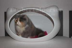 Jerrys Katzenhöhle Taubertalperser