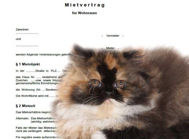 Katzen In Mietwohnung Verboten Erlaubt Taubertalperser