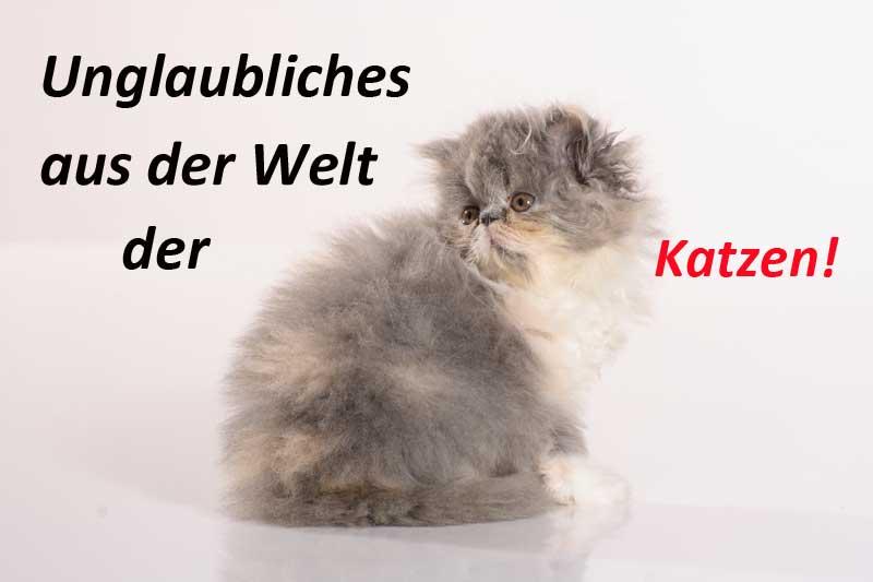 Rekorde Aus Der Katzenwelt Taubertalperser