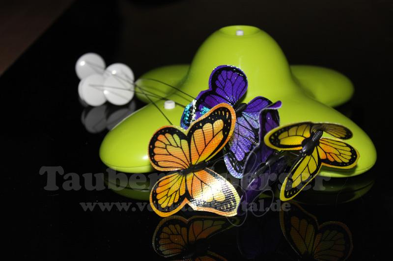 Funny Butterfly bei den Taubertalpersern