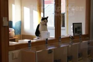 Katze-Taubertalperser