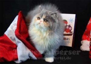 Weihnachten_Janis