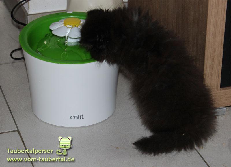 catit-taubertalperser-07