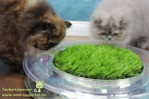 petstage-nature-green-02
