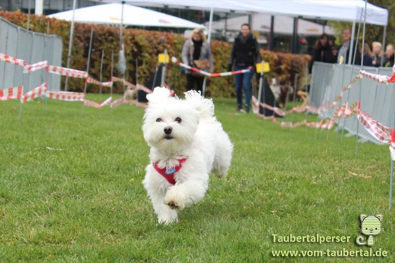 Animal, Heimtiermesse, Taubertalperser, Hund
