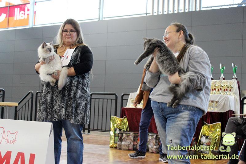 Animal, Heimtiermesse, Katzenausstellung, Taubertalperser