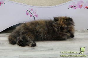cat-on-taubertalperser-01