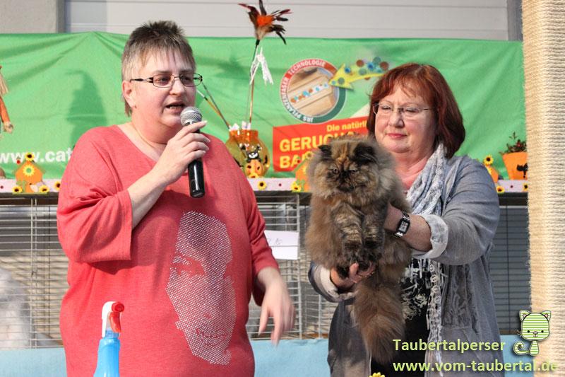 Katzenausstellungen, Taubertalperser, Katzenpräsentation