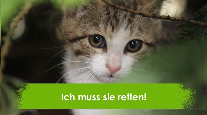 Bauernhofkatzen