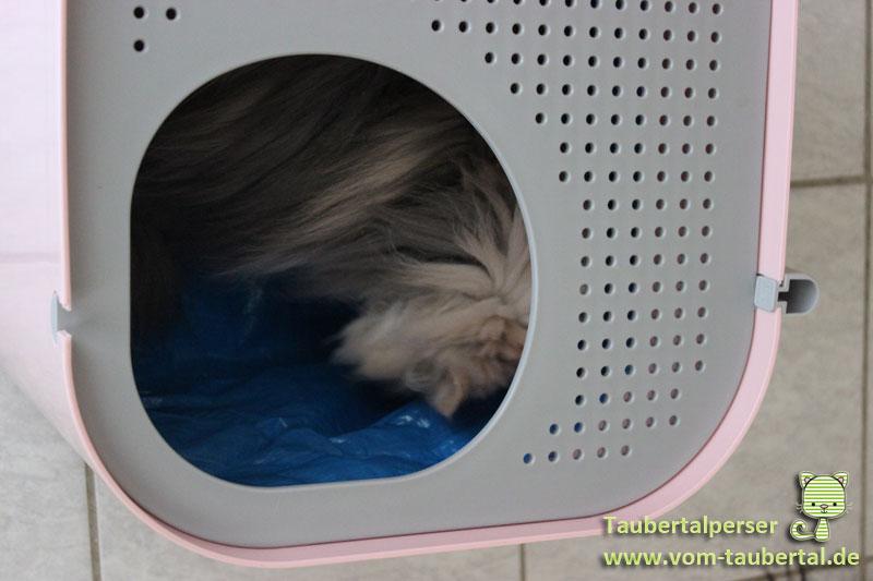 Modkat Katzentoilette von oben mit Katze