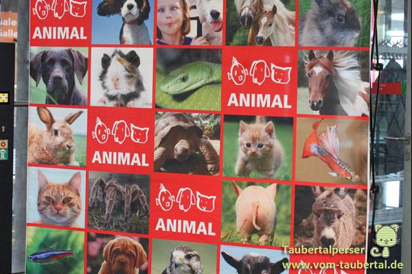 Taubertalperser Animal Stuttgart