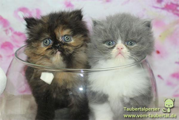 Katzennamen Taubertalperser