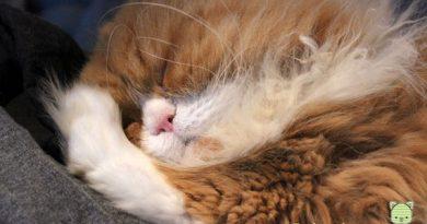 säugende katze aufpäppeln