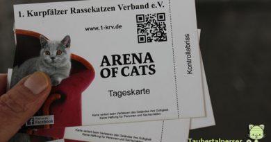 Arena of Cats, Taubertalperser, Mannheim, Maimarkt