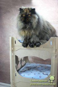 Katzenschlaf- und Spielturm, Einhorn, Taubertalperser, BioforPets, BioforCats