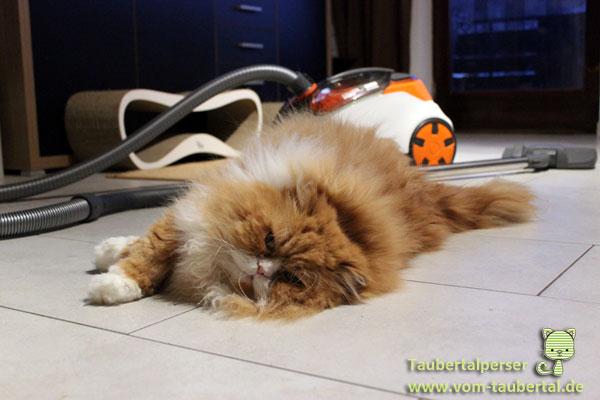 Thomas Cycloon Hybrid Pet & Friends , Taubertalperser, Produktvorstellung