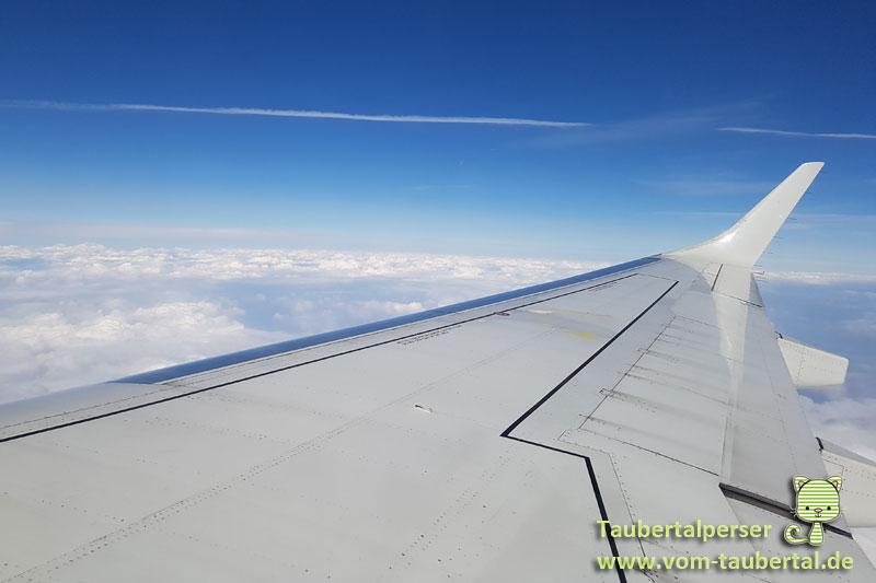 Taubertalperser, Shanghai, Travel, Reisen, Katzen, Flugzeug, Fliegen