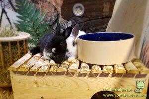 Tierladen, Tierhandel, Boykott, Taubertalperser, Macht der Konsumenten, Information