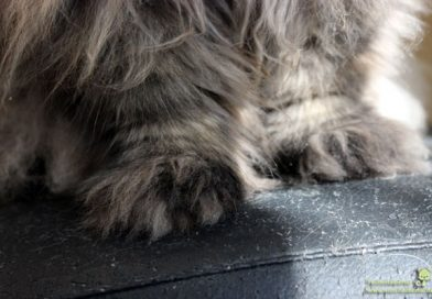 Woodking Taubertalperser Katzen Möbel Interior
