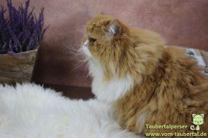 PetsNature, Schaffell, Taubertalperser, Katzenblog, Produktvorstellung