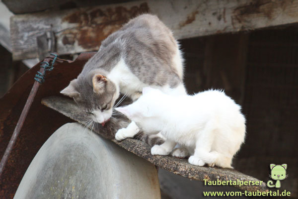 CPC, Tierschutz, Anika Susann May Leske, Tierleid, Pseudotierschützer, alles nur Schein