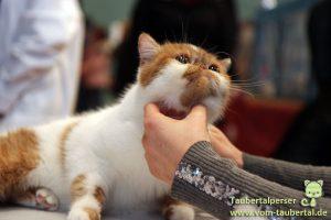 Taubertalperser, Katzenblog, Arena of Cats, Katzen, Ludwigshafen