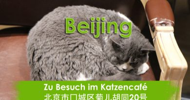Beijing, Pet, Cats, Katzencafe, Catcafe, Taubertalperser