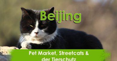 Beijing, Petmarket, China, Taubertalperser, Reisen, Streetcat, Travel