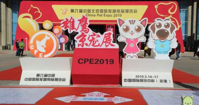 Beijing, Taubertalperser, China Pet Expo, China, Reisen, Messe, Katzen, Hunde