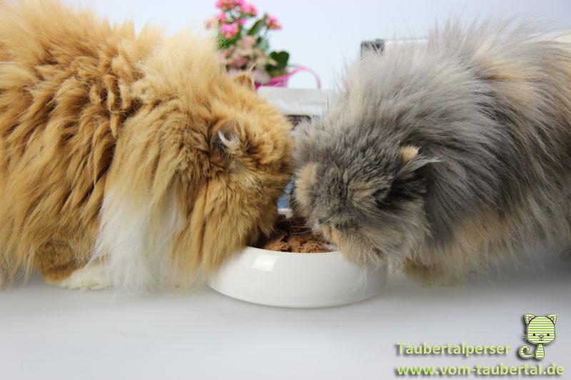 Katzenfuttertests, unabhängiger Futtertest, Taubertalperser, Katzenblog