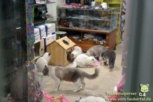 Taubertalperser, PetMarket, Beijing, Taubertalperser, China, Reise, Tierschutz, Streetcats