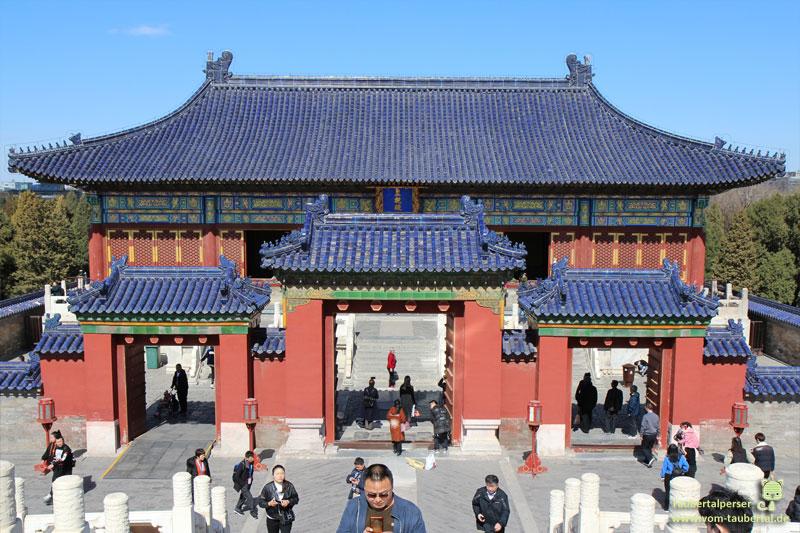 Beijing, Taubertalperser, Katze