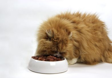 Katzenfuttertest, unabhängiger Katzenfuttertest, Taubertalperser, Katzenblog, Katzenfutter, nassfutter