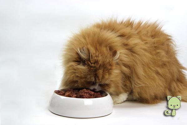 Katzenfuttertests Bei Den Taubertalpersern Die Taubertalperser