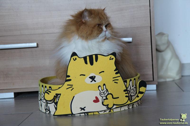 Beijing, Taubertalperser, Katzen, Hello Kitty, Handtasche