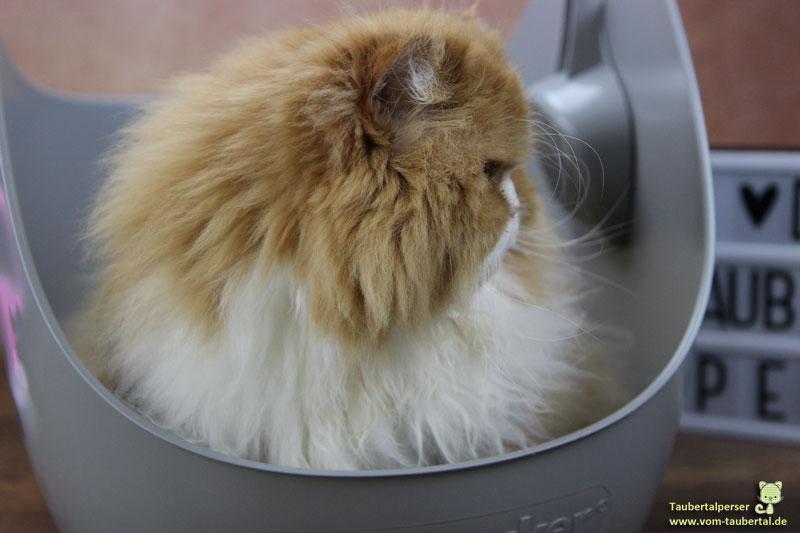 LitterLocker, Litter Box, Produktvorstellung, Produkttest, Taubertalperser, unabhängiger Katzenblog