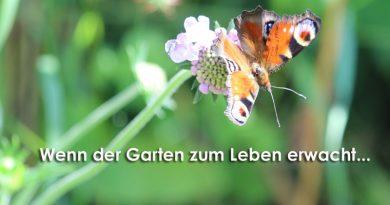 Garten, Natur, Taubertalperser, Streifenwanze, insektenfreundlich