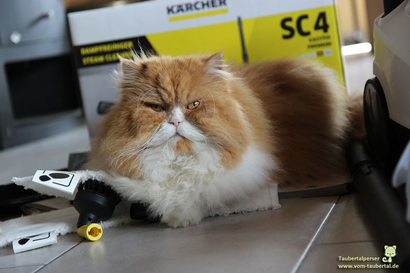 Kärcher Dampfreiniger SC4 Premium, Taubertalperser, Hygiene im Katzenhaushalt, Katzenblog, Produktbericht, Review
