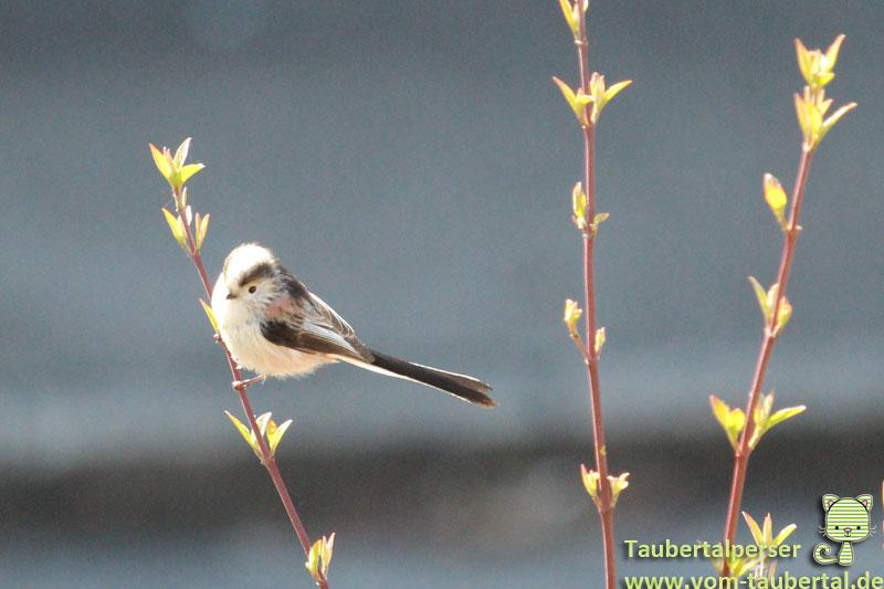 Vogelfütterung, Ganzjahresfütterung, Gartenvögel, Frunol, Delicia, begeistert