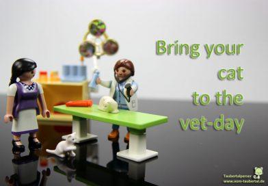 Bring your cat to the vet day, Taubertalperser, Katzen, Tierarzt, Vorsorge, Gesundheit