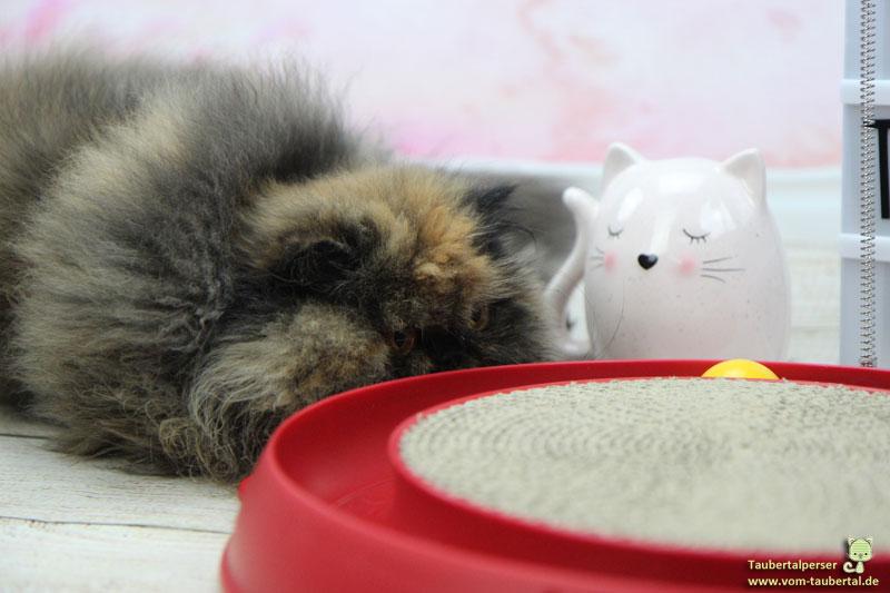 Catit Play-n-scratch, Taubertalperser, Produkttest, Katzenblog, unabhängiger Katzenblog, Hagen, Catit, Spielzeug