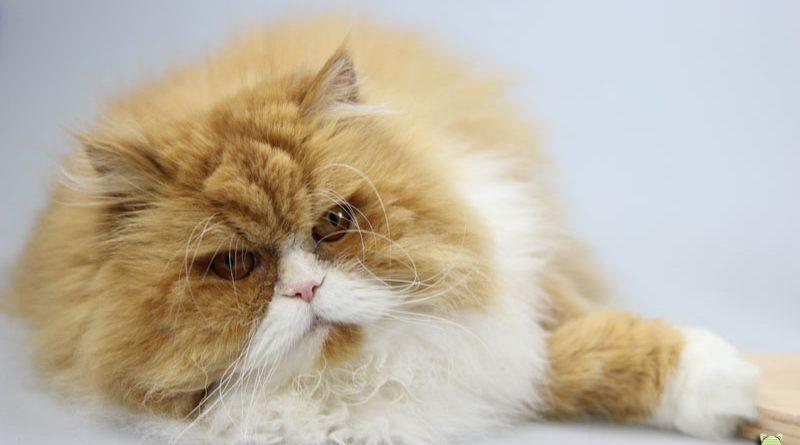Dividi, unabhängiger privater Katzenblog, Taubertal.erser